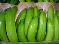 Class A Fresh Cavendish Bananas