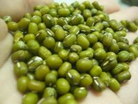 Top Quality Fresh,Frozen And Dried Green Mung Beans