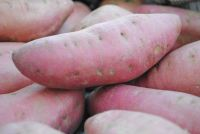 Grade 1 Fresh Yellow And Purple Sweet Potatoes
