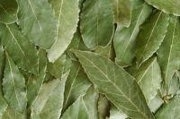 Dries Bay Leaf