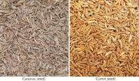 Top Quality Caraway Seeds,Cumin Seeds,Black Cumin Seeds, Anise Seeds,Ajwain Seeds,Fennel Seeds Available In Bulk