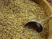 High Quality Arabica And Robusta Green Coffee Bean