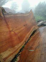 Wood Slab Table Top