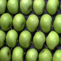 Grade A Fresh Apples, Fresh Green Apples, Fresh Red Apples
