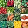 Organic Green Seeds