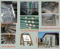 Automatic chicken cage system