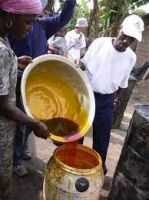 Crude red palm oil for sale