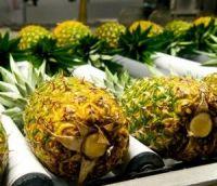 Sweet fresh pineapples for sale