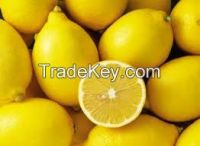 Fresh Yellow Lemon For Sale