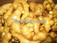 Fresh Young and Old Ginger For Sale