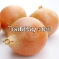 Fresh Red,Yellow and White Onions For Sale