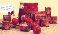 Canned  Tomato paste/ tomato sauce/tomato ketchup