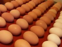 FRESH CHICKEN EGGS Available for sale at unbeatable prices