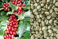 Quality Arabica Coffee Beans For Sale at competitive price.