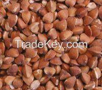 Buckwheat kernels for sale.