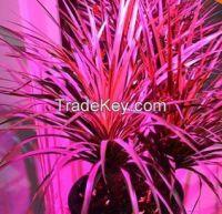 Grow lights 10W E27 LED Grow lamp bulb for Flower plant