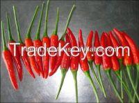 Fresh Small Red chilli