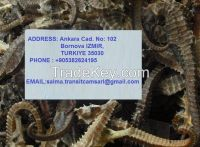 Best and well Dried seahorse( Length > 10cm) with no Additives.