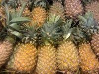 Fresh pineaple for sale