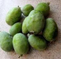 Fresh guava  for sale