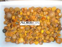 100% High Quality Cattle Gallstones