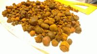 Cattle Gallstones