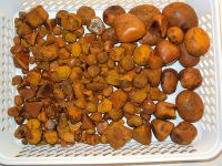 100% High Quality Ox Gallstones