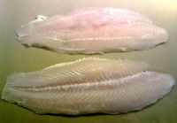 Hight Quality Frozen Pangasius fish Fillets