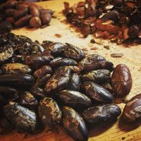 Wholesale Price Cacao Beans