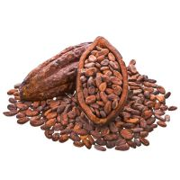 Hight Quality Cacao Beans
