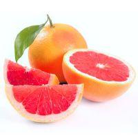 Fresh Naval Oranges from Netherland