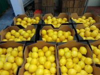 Natural Fresh Green Lemon