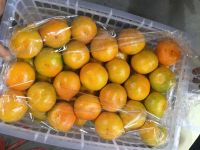 Fresh Quality Export Grade Orange Tangerines / Mandarin from Netherland