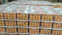 Fresh Quality Export Grade Orange Tangerines / Mandarin from Netherland