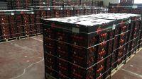 Fresh Tangerine Fruit Cheap Price from Netherland