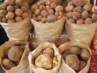 Truffles From Morocco for supply