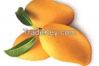 pakistani fresh mangoes