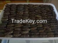 High quality popular dried sea cucumber