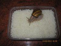 Snails roe