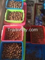 Big Loose Beads Rudraksha 6 to 9 mukhis, 20 to 24 mm