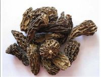 Dried Morel without stem