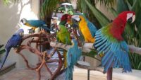 Exotic Birds,Parrots and Parrots Eggs,Africa Grey Parrot,308 Healthy Eggs,Parrot Eggs,Eggs