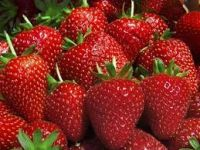 Fresh Berries  for sale