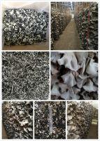 Dried White Back Black Fungus Mushroom Slices