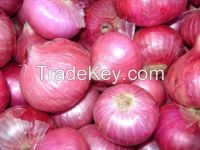 Brown Fresh Onions from Pakistan