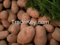 Fresh Potatoes from Pakistan