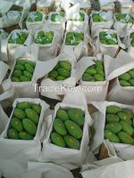 Sindhri Mangoes 6 and 8 inches pakistan