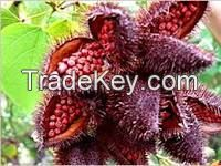 best quality Annatto Seed