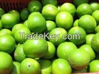 FRESH PESIAN GREEN LIME