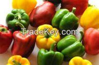 fresh color capsicum